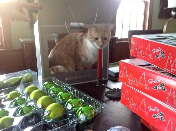 Toby, my Christmas take-down helper.