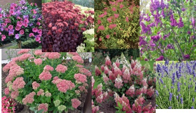 Plant material collage