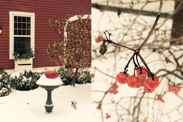 winter red; janebalshaw.com