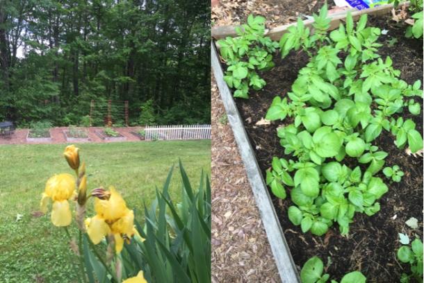 spring veggie garden; janebalshaw.com