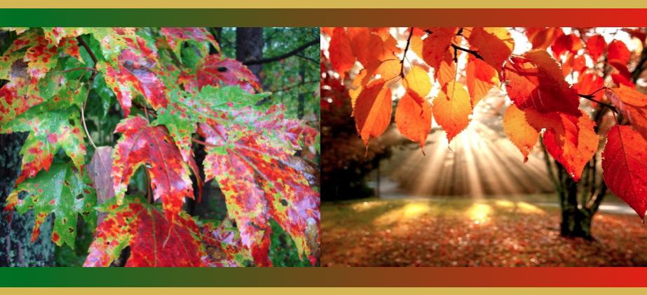 fall-color-janebalshaw-com