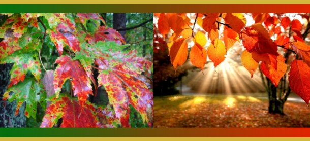 fall-color-janebalshaw-com
